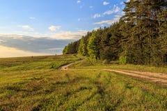 La route courbe entre la forêt de pin et le champ Photos libres de droits