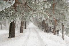 La route dans la forêt d'hiver Photos libres de droits