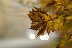La route dans l'érable de jaune de forêt d'automne part sur un fond des phares troubles de voiture image stock
