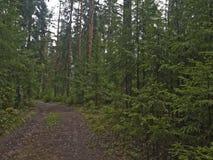 La route dans la forêt photographie stock libre de droits