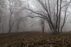 La route dans la forêt brumeuse photo libre de droits