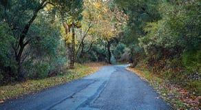 La route dans la forêt, la Californie, Etats-Unis Photo stock