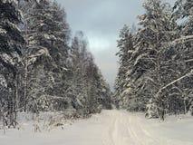 La route dans la forêt neigeuse froide d'hiver Image stock