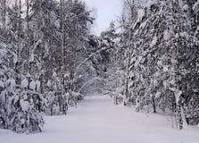 La route dans la forêt neigeuse froide d'hiver Image libre de droits
