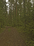 La route dans la forêt parmi les arbres image libre de droits