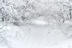 La route dans la neige avec des arbres Image libre de droits