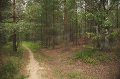 La route dans le bois Photos stock