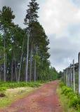 La route dans le bois, la terre rouge, garent la gorge noire de rivière mauritius Photos stock