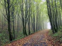 La route dans les bois Photo stock