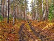 La route dans les bois Images libres de droits