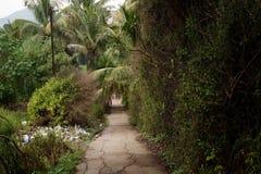 La route dans les bois Photo libre de droits