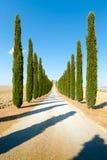 La route de campagne a flanqué avec des cyprès montant une colline Images stock