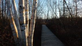La route de planche dans les bois photos stock