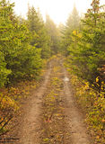 La route des arbres Image stock