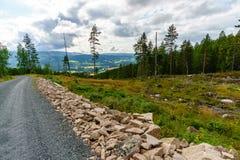 La route en Norvège Photos stock
