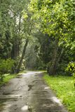 La route en parc Photographie stock