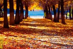 La route en parc répandu avec des feuilles d'automne images libres de droits