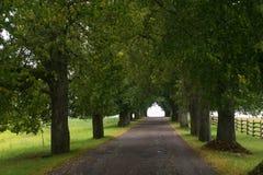 La route entre les arbres en parc Photo stock