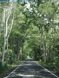 La route est pleine de beaux, louches arbres images stock