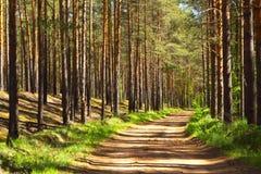 La route forestForest de pin Image libre de droits