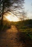 La route illuminée par la lumière du coucher de soleil Photographie stock
