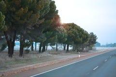 La route, les arbres verts sont légèrement couvertes de gel, tôt le matin image libre de droits