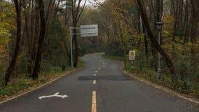 La route menant à la forêt Photo libre de droits