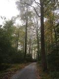 La route moins prise Photo libre de droits