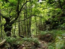 La route moins a voyagé, parcouru - chemin par les bois verts luxuriants Photo stock
