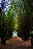 La route par la forêt en bambou et la lumière finissent l'extrémité du tunnel photographie stock libre de droits