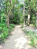 La route par la forêt Photo stock