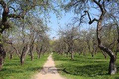 La route par le champ de pommiers Premi?re source image libre de droits