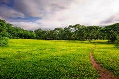 La route sur l'herbe Photos stock