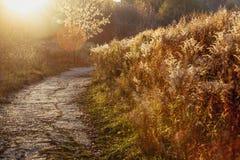 La route sur le champ avec un arbre, lumière de coucher du soleil Fin d'été ou automne tôt image stock