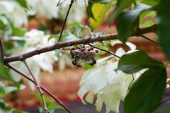 La ruche de guêpe images stock