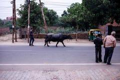 La rue dans l'Inde Photo stock