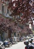 La rue dans le centre ville 10 peut 2010 à Barcelone, Espagne Photo stock