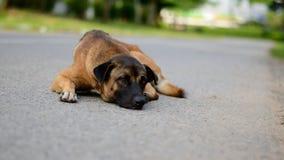 La rue du chien Images libres de droits