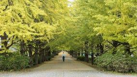 La rue Meiji Jingu Gaien voisine Photo stock