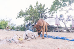 La rue poursuit jouer sur la plage de l'île de Nusa Lembongan, Bali, Indonésie photographie stock