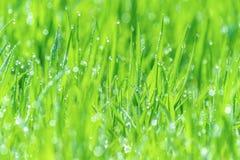La rugiada bagnata dell'erba ha offuscato il bokeh di luce solare del prato fertile del fondo Immagini Stock Libere da Diritti
