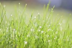 La rugiada dell'erba di mattina Fotografia Stock Libera da Diritti