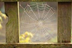 La rugiada ha riguardato il web del ragno Fotografie Stock Libere da Diritti