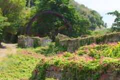 Vieux moulin de sucre avec les fleurs sauvages Photographie stock libre de droits