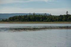 La Russia Bratsk fiume della treccia da 2014 mattine Fotografia Stock