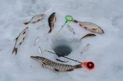 La Russia, pesca di inverno, concorsi della pesca sul ghiaccio, spigola, scatola di pesca, attrezzatura, ghiaccio, inverno, fiume immagini stock libere da diritti