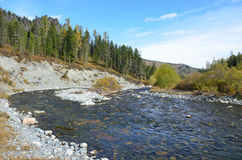 La Russia, Repubblica di Altai, distretto di Ust-Koksinsky, fiume di Acchan Akchan a settembre Immagine Stock Libera da Diritti