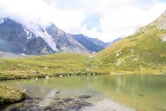 La Russia, Repubblica di Altai Immagini molto belle della natura in alte montagne innevate di Altai, fiumi veloci e rumorosi dell Fotografia Stock Libera da Diritti