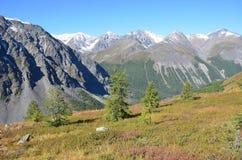 La Russia, Repubblica di Altai, picchi di montagna della cresta di Nord-Chuya in tempo soleggiato di estate fotografia stock libera da diritti