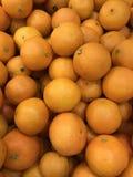 La Russia St Petersburg «Nsis latino arancio del sinÄ di Ã- di trus «di CÄ immagine stock libera da diritti